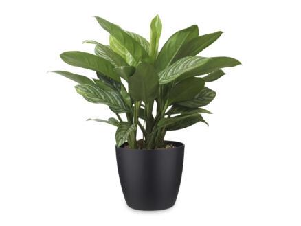 Aglaonema Stripes 70cm + pot à fleurs Elho noir