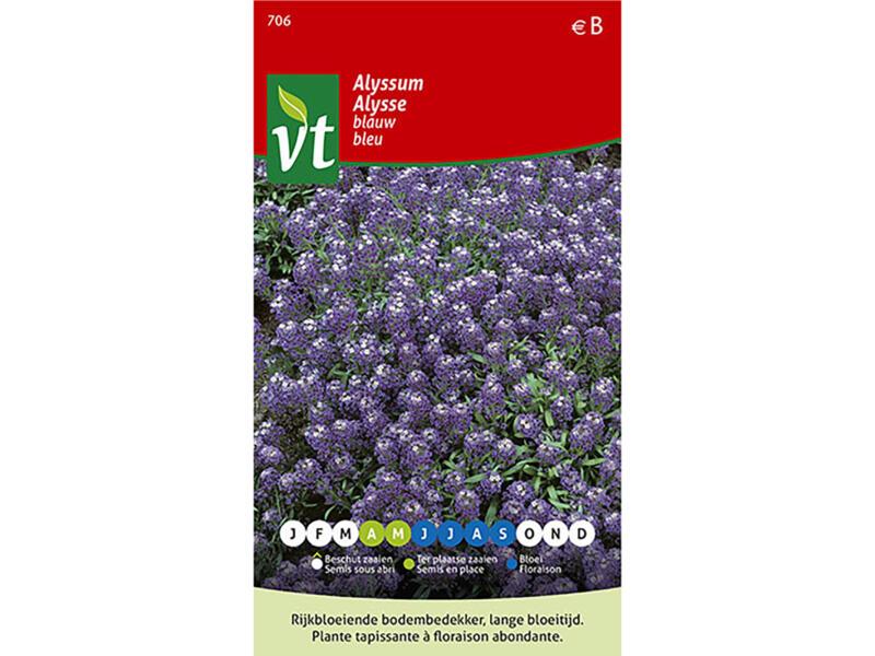 Alyssum blauw