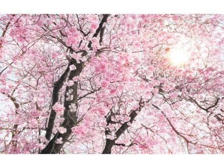 Bloom intissé photo numérique 4 bandes