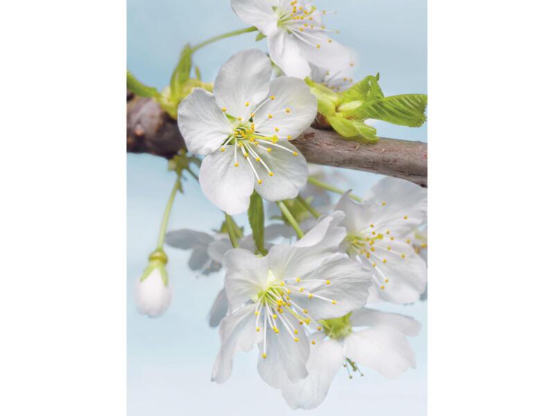 Blossom fotobehang vlies 2 stroken