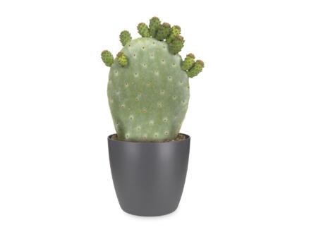Cactus Opuntia Ficus-Indica 40cm + Elho bloempot antraciet