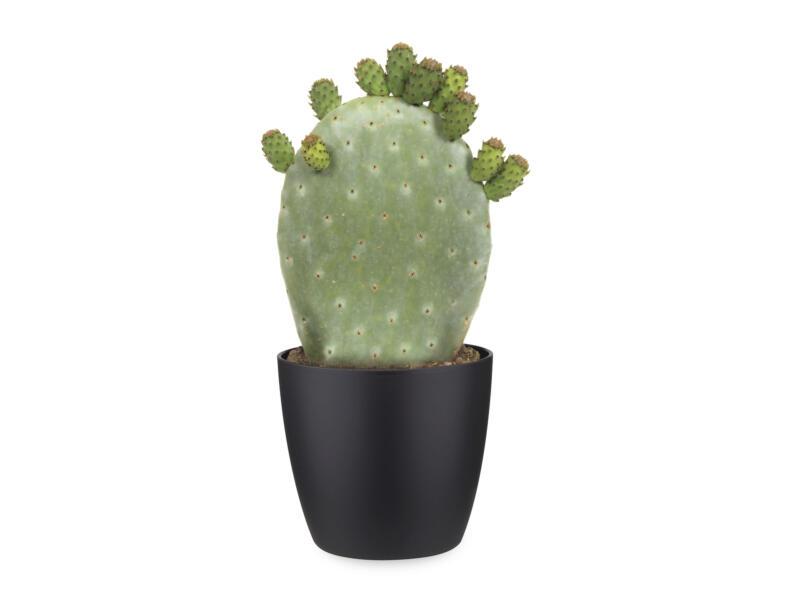Cactus Opuntia Ficus-Indica 40cm + pot à fleurs Elho noir