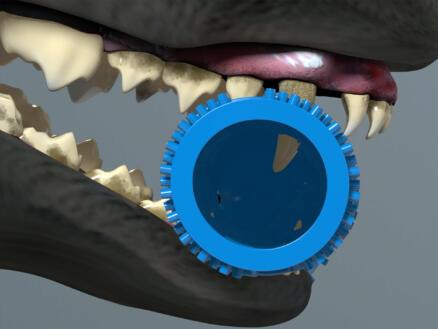 Chewbrush kauwbeen 25cm