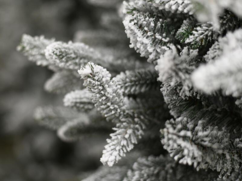 Colorado witte kerstboom 150cm