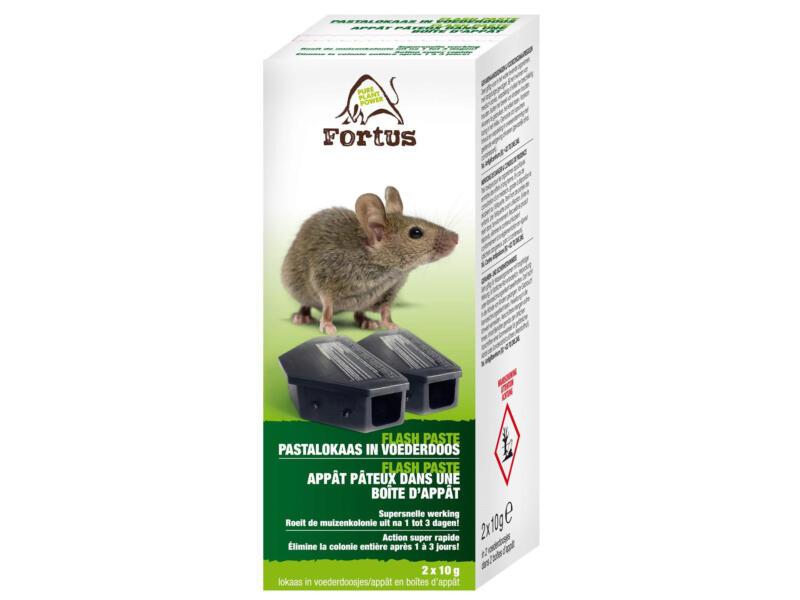 Fortus Flash Paste muizenvergif 2x10 g + lokdoos