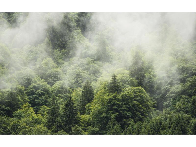 Forest Land intissé photo numérique 4 bandes
