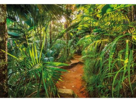 Fotobehang 8 stroken Jungle Trail