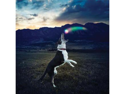 Nite Ize GlowStreak Disc-O LED bal hond rubber