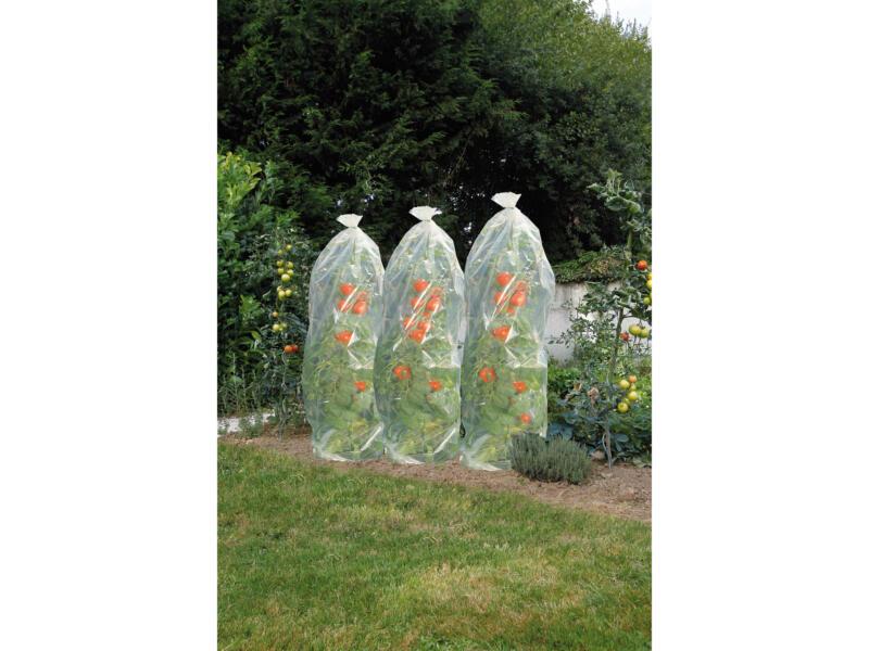 Housse à tomates 0,6x1,5 m transparent