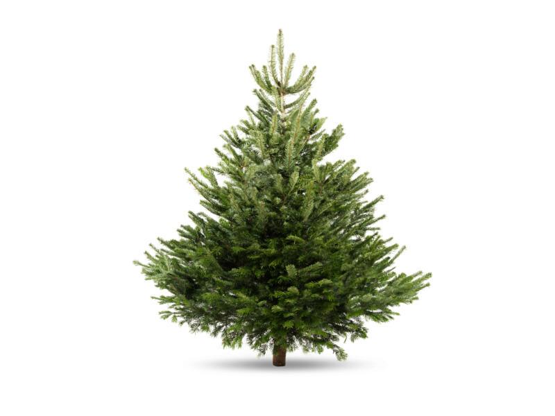 Kerstboom Nordmann 150/175 cm