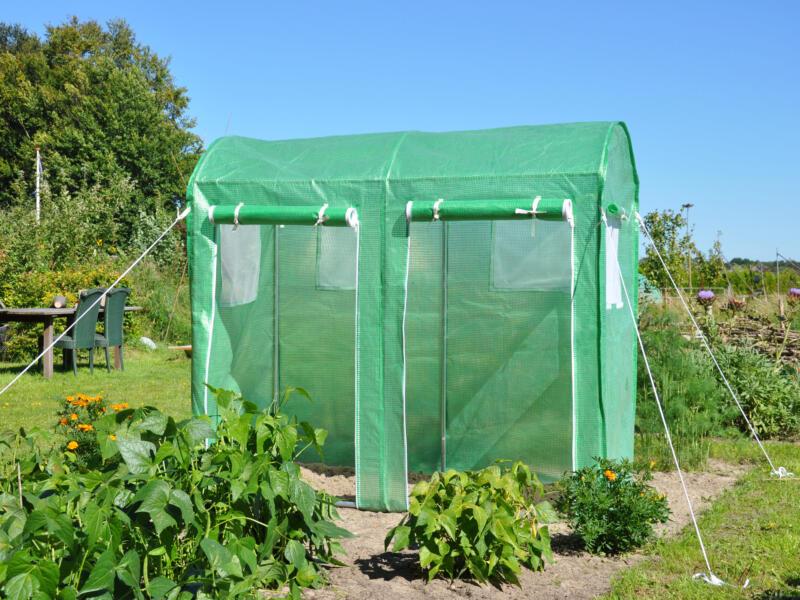 Royal well Maxi Tomato serre vert