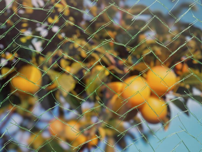 Mono filet pour arbres fruitiers 8x8 m vert