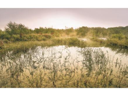 Morning View II intissé photo numérique 4 bandes