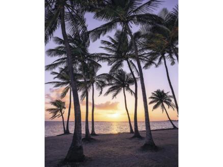 Palmtrees Beach intissé photo numérique 2 bandes