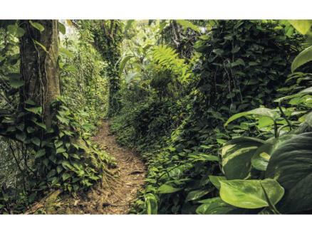 Path of Dreams intissé photo numérique 4 bandes