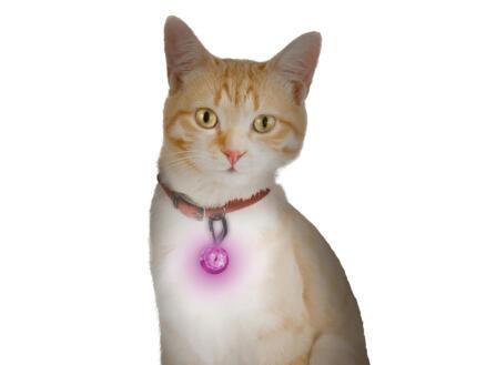 PetLit lumière LED rose pour collier