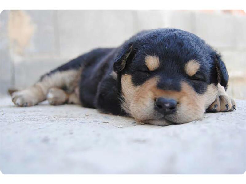 Placemat antislip 45x30 cm doggy dog