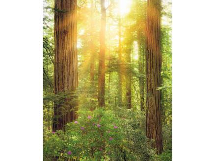 Redwood intissé photo numérique 2 bandes