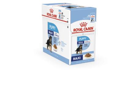 Royal Canin SHN Maxi Puppy croquettes chien 140g 10 pièces