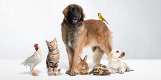 Soins des animaux