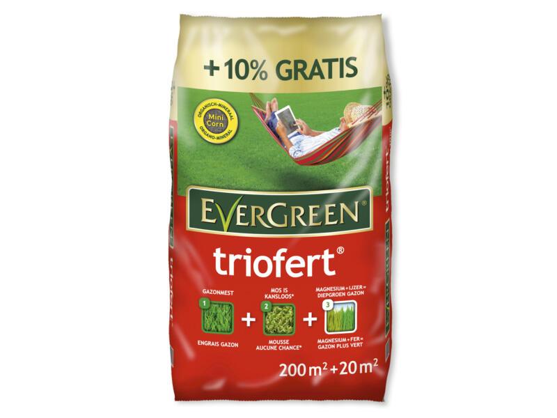 Evergreen Triofert engrais gazon 22kg 200m² + 10% gratuit