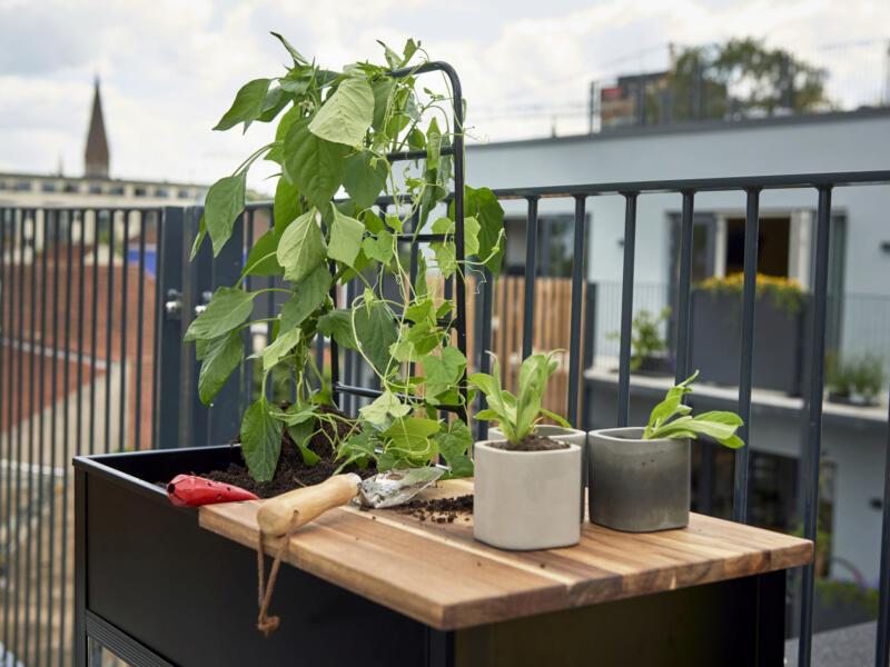 Royal well Vertical Garden balkonserre veiligheidsglas zwart