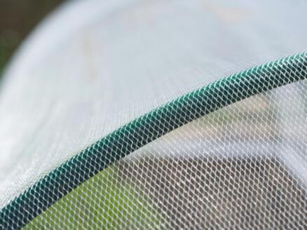 Voile anti-insectes 2x5 m transparent