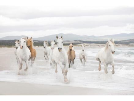 White Horses fotobehang 8 stroken