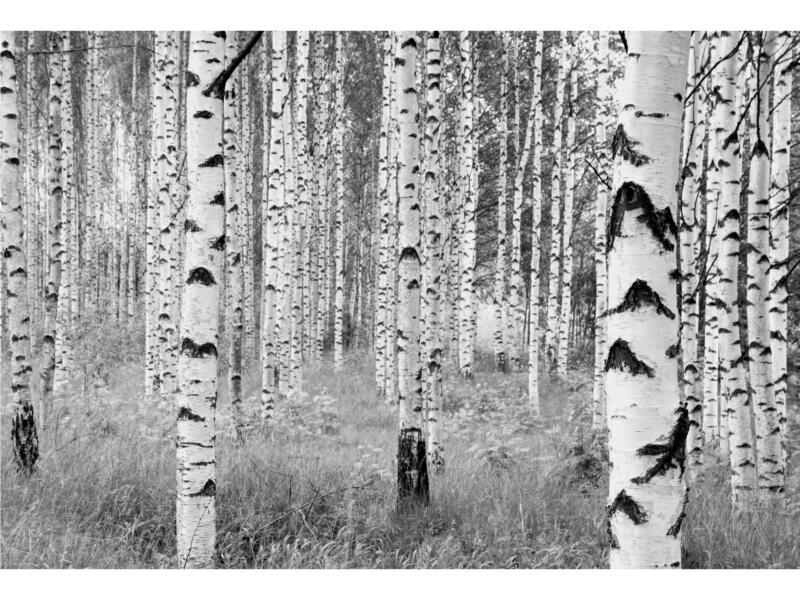 Woods fotobehang vlies 4 stroken