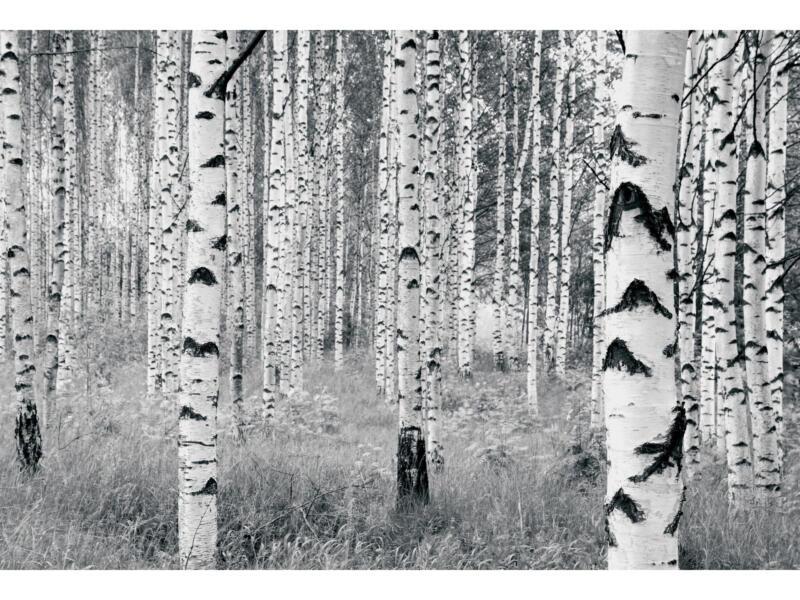 Woods fotobehang vlies 8 stroken