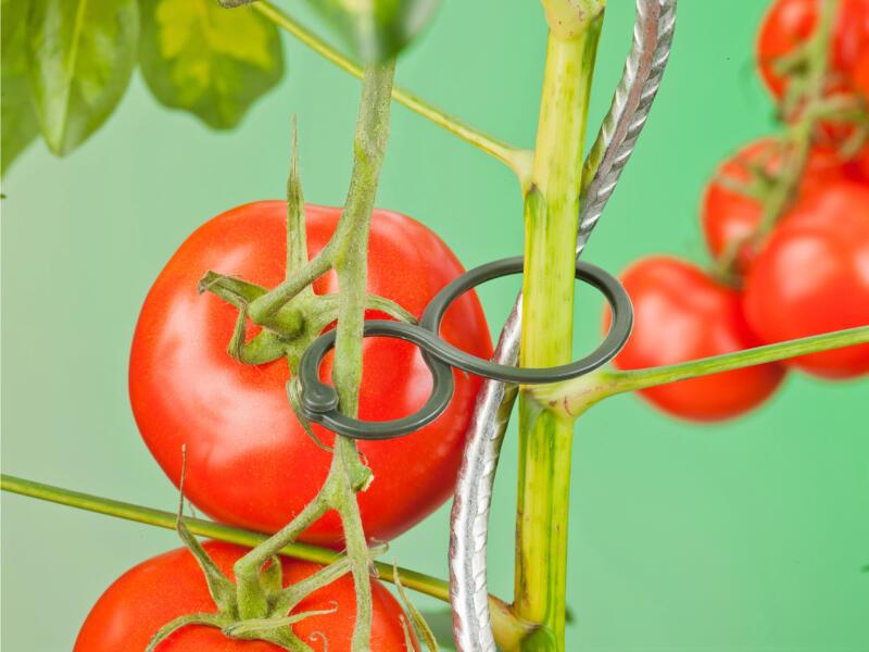 Ubbink attache double pour tomates 30/20mm 25 pièces