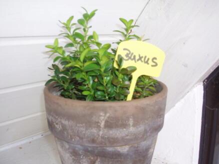 Nature étiquette de jardin à planter 15cm 10 pièces