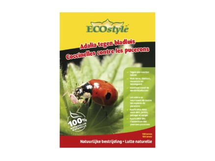 larves de coccinelle anti-pucerons 50 pièces